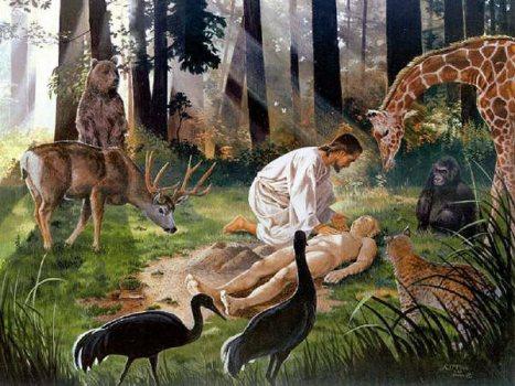 Resultado de imagem para fotos e imagens da criação de Deus